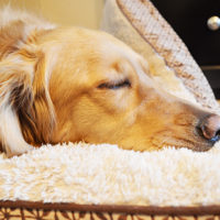 Tips for Handling Holiday Pet Messes