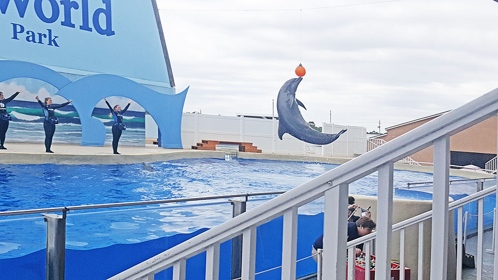 Best Time To See Dolphins In Panama City Beach